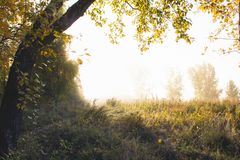 The rays of the sun break through the morning autumn mist and il royalty free stock image