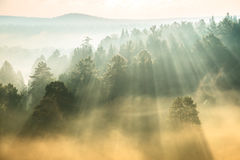 Rays of the sun breaking through the fog Stock Photography