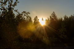 Rays of the sun at dawn, making their way through the leaves of Stock Image