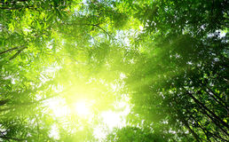 Rays of sun in deep forest Stock Image