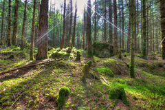 Rays of the sun in the enchanted forest in HDR Stock Images