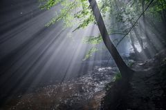 The rays of the sun enlighten the deep gorge. The rays of the sun falling into a deep gorge. At the bottom of the ravine is a river that creates limestone rock stock photography