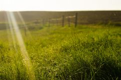 The rays of the sun fall on the grass. Beautiful background. Gold, green colors. Spring nature royalty free stock image