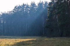 The rays of the sun fall on a part of the forest. And the fields in front of it royalty free stock images