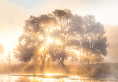 The rays of Sun through a fog and tree's Royalty Free Stock Photography