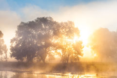 The rays of Sun through a fog and tree's Royalty Free Stock Photos