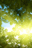 Rays of sun in forest Royalty Free Stock Images