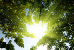 Rays of sun in forest Stock Image