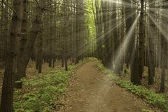 Rays of Sun in the woods Royalty Free Stock Photography