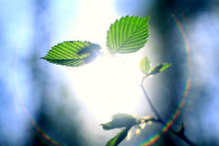Rays of the sun glare leaf buds branches Stock Photo