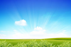 Rays of the sun on the green Royalty Free Stock Images