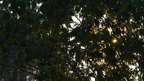 Rays of the sun at the leaves of a tree.