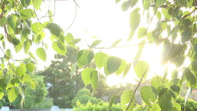 Rays Of The Sun Through The Leaves Of Trees stock video footage