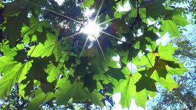 The rays of the sun through the leaves of trees stock video