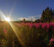 The rays of the sun. Leningrad region. Russia Royalty Free Stock Image