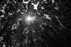 Rays of sun light through tropical mangrove Stock Images