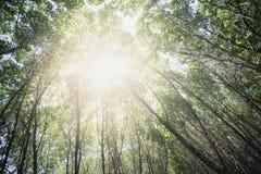 Rays of sun light through tropical mangrove Stock Photo