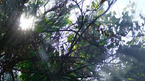 Sun breaks through a smoky tree. Rays of the sun make their way through the branches of a tree in black smoke stock video