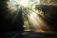 Rays of the sun on a misty morning. Royalty Free Stock Image