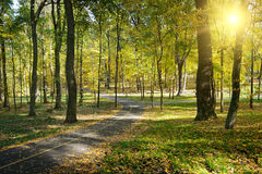 Rays of sun in park Stock Photo