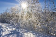 The rays of the sun penetrate through the branches in the snow. Austria royalty free stock photos