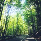 The rays of the sun piercing through the branches of the tree. The road that takes you to an oasis of peace royalty free stock photos