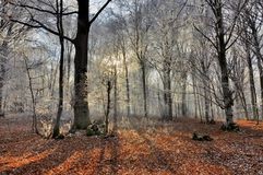 Rays of the sun and shadows in winter forest. Forest with hoarfrost in the sun rays in winter season. Forest symphony stock images