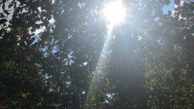 Rays of the sun shine through the green leaves stock video footage