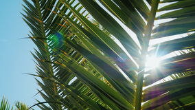 The rays of the sun shine through the leaves of the palm tree against the blue sky. Concept - rest in the resort. Crane stock footage
