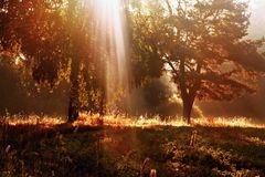 Rays of the sun shining through the trees over Royalty Free Stock Photos