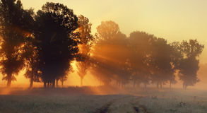 The rays of the sun Royalty Free Stock Photography
