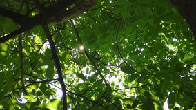Rays of the sun stock footage