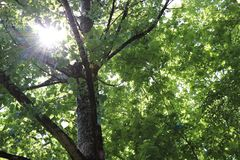 Rays of sun in the trees. Sun naturen Royalty Free Stock Photography