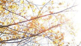 Rays of sun through yellow leaves. This video footage shows the autumn landscape. Against the backdrop of colorful autumn trees. The clip can be the perfect stock video footage