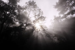 Rays of sunlight against forest Royalty Free Stock Photography