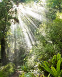 Rays of sunlight beam through dense tropical jungle Stock Photo