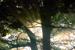Rays of sunlight in forest Stock Images
