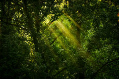 Rays of sunlight Royalty Free Stock Photography