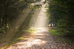 Rays of sunlight on the path. In the forest Royalty Free Stock Photo