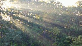 Rays of sunlight shine through the trees on a foggy morning in autumn. Rays of sunlight shine through the trees on a foggy morning in spring autumn Foggy stock video footage