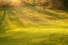 Rays of sunlight shining on to grass. Rays of golden sunlight shining on to grass patch royalty free stock photography
