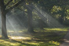 Rays of sunlight on Southampton Common royalty free stock image