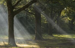 Rays of sunlight on Southampton Common stock photography