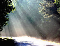 Rays of Sunlight. Sunlight Rays Arkansas forest road Royalty Free Stock Photography