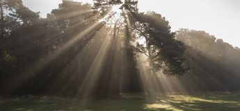 Rays of sunlight on Southampton Common royalty free stock photography