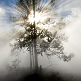 Rays of Sunlight in Yellowstone National Park Royalty Free Stock Photo