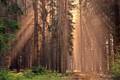Rays of the sunrise through the trees Royalty Free Stock Photos