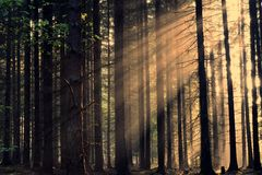 Rays of the sunrise through the trees Stock Photos