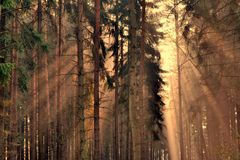 Rays of the sunrise through the trees Royalty Free Stock Images