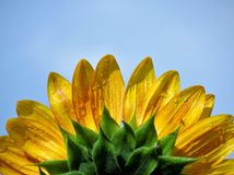 Rays of Sunshine Stock Photo